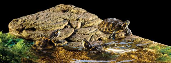 turtle_bank.jpg